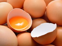 Thermaline information for the Liquid Egg industry